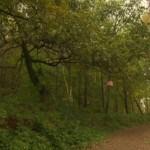 Hopwas Woods